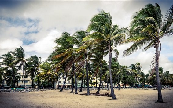 Wallpaper Palm trees, wind, park, clouds, Florida, USA