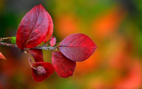 Fondos de pantalla Hojas rojas, ramitas, otoño, fondo borroso