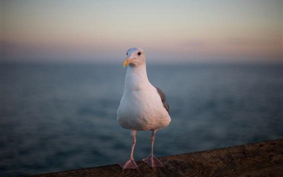 壁紙 シガルクローズアップ、白い羽、足