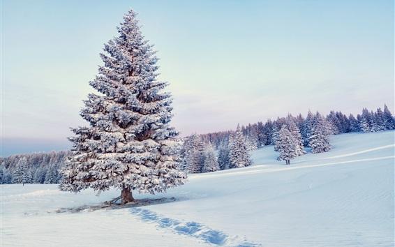 Обои Снег, деревья, лес, зимний пейзаж