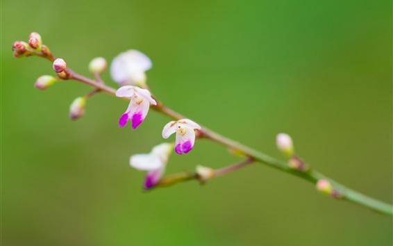 Wallpaper Spring, flower buds, twigs