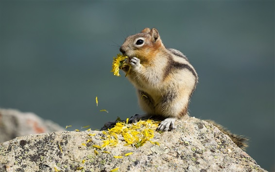 Wallpaper Squirrel eat flowers