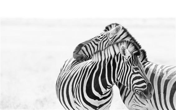 Papéis de Parede Duas zebras, branco e preto