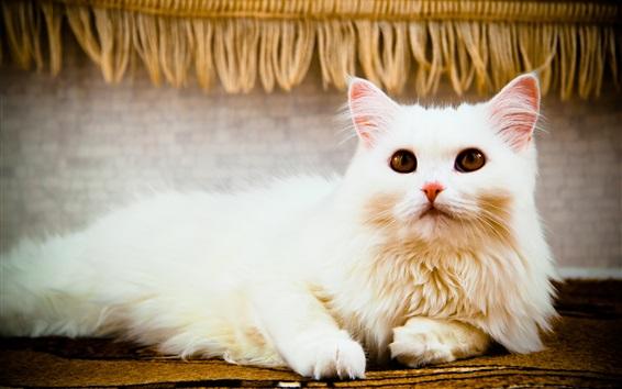 Wallpaper White cat, look