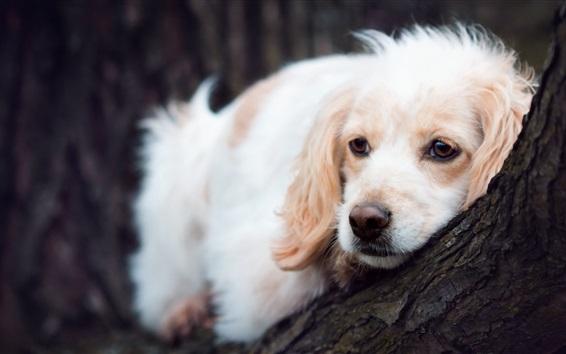 Wallpaper White dog, sleep, tree