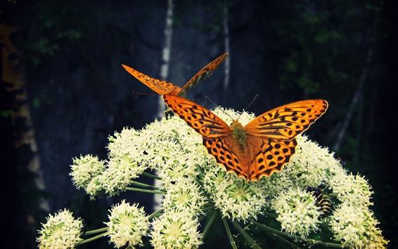 Papéis de Parede Flores brancas, borboleta, inseto