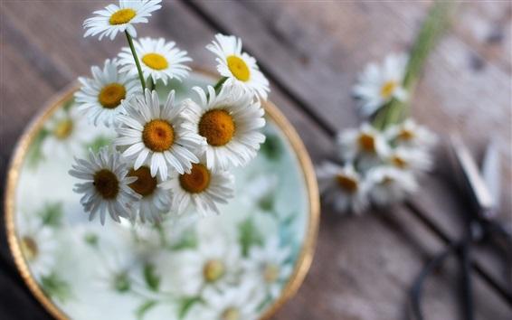Wallpaper White flowers, chamomile, bokeh