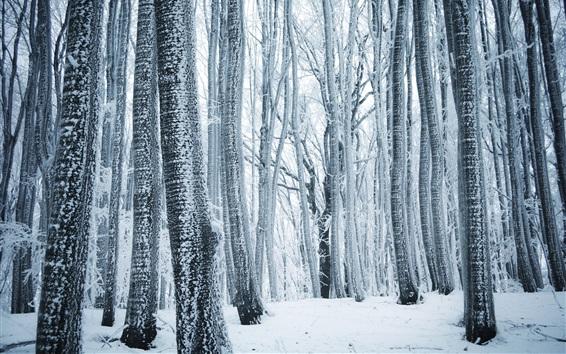 Wallpaper Winter, forest, trees, white snow
