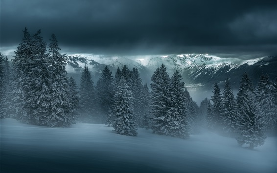 Wallpaper Winter night, forest, trees, mountains, snow