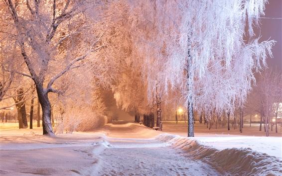 Fond d'écran Hiver, Parc, Arbres, neige, sentier, banc, nuit, lumières