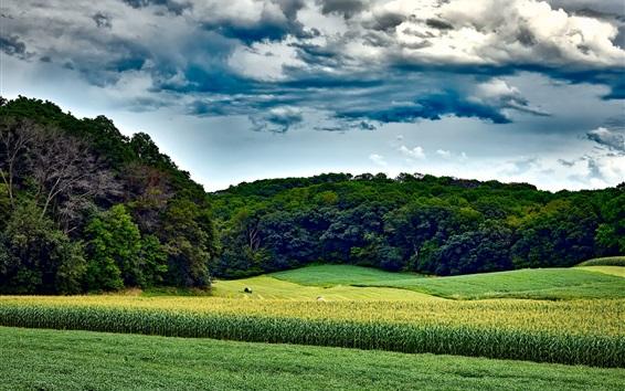 Wallpaper Wisconsin, USA, cornfield, trees, green, summer