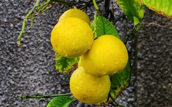 Fond d'écran Citron jaune