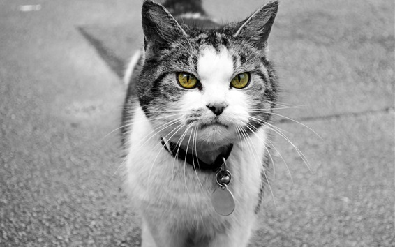 Papéis de Parede Olhos amarelos, gato, frente, vista