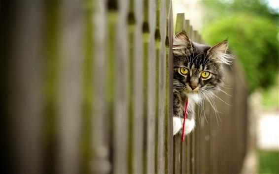 Papéis de Parede Olhos amarelos gatinho olhar, cerca