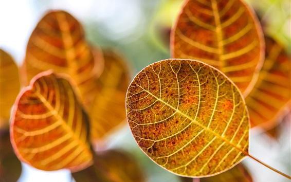 Wallpaper Yellow leaves, autumn, blur background