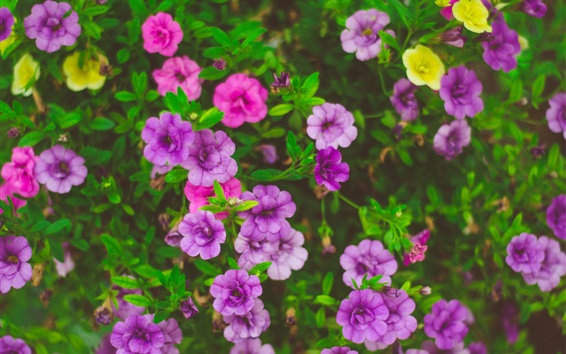 Wallpaper Beautiful flowers, pink, purple, yellow