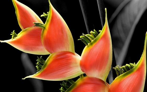 Fond d'écran Beau, orange, pétales, fleurs, gros plan