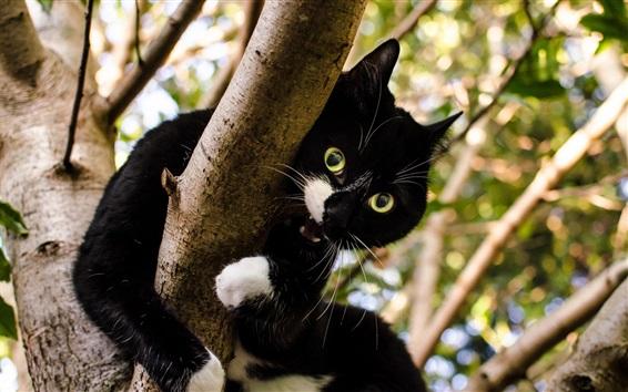 Wallpaper Black kitten, tree, blur background