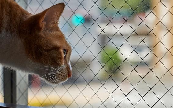 Papéis de Parede Curioso, gato, olhar, saída, Janela