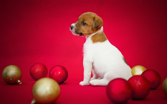 Wallpaper Dog and Christmas balls, puppy, red background