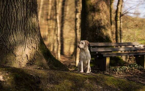 Wallpaper Dog look to other side, bench, trees
