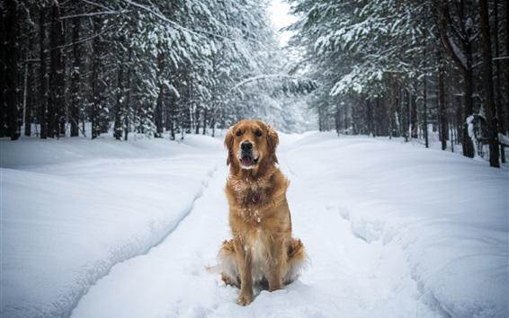 Обои Собака сидит в снегу земле, зимой