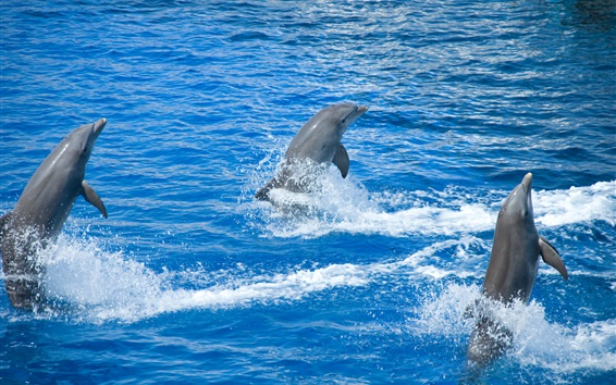 Wallpaper Dolphins out water, show time