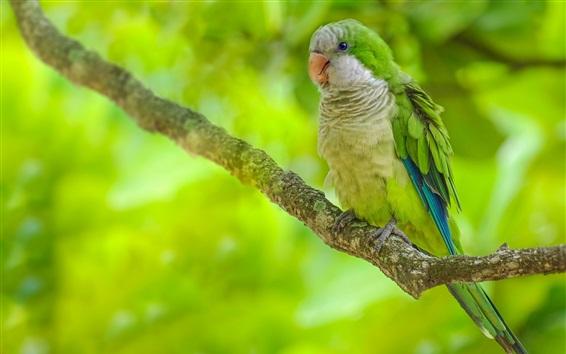 Wallpaper Green feather parrot, bird, tree