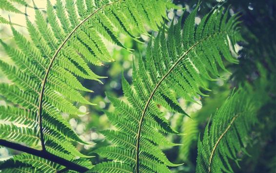 Wallpaper Green fern leaves