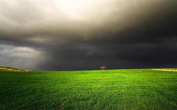 Green field, black clouds, tree Wallpaper Preview