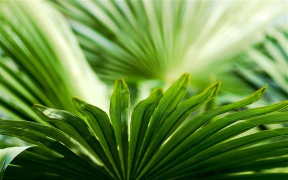 Обои Зеленые листья крупным планом, размыто