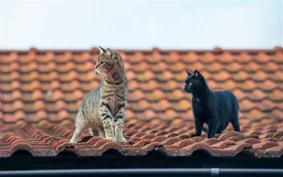 Wallpaper Grey and black, cats, roof