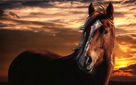 Papéis de Parede Cavalo, pôr do sol