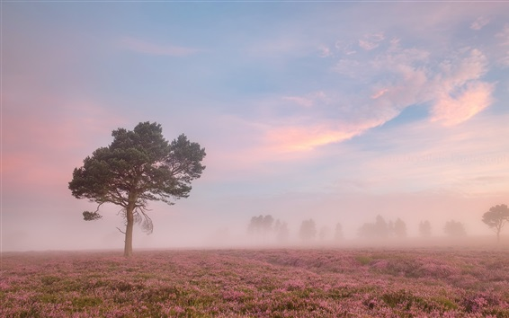Morning, flowers field, tree, fog Wallpaper Preview