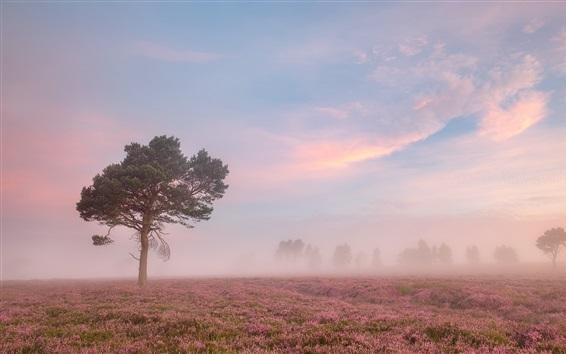 壁紙 朝、花畑、木、霧