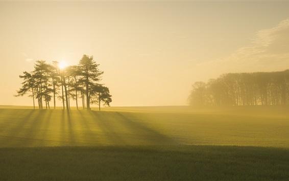 Papéis de Parede Manhã, nevoeiro, árvores, floresta, campo, amanhecer