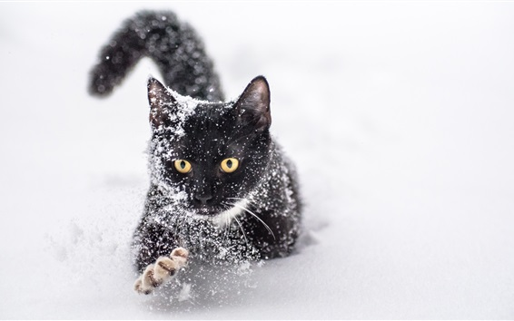 Обои Одна черная кошка в снегу