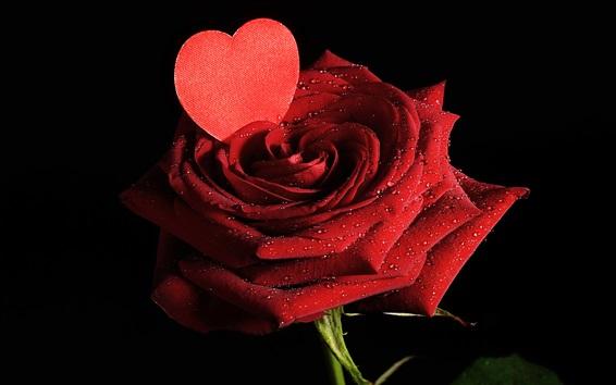 Papéis de Parede Uma rosa, pétalas vermelhas, orvalho, coração do amor, fundo preto