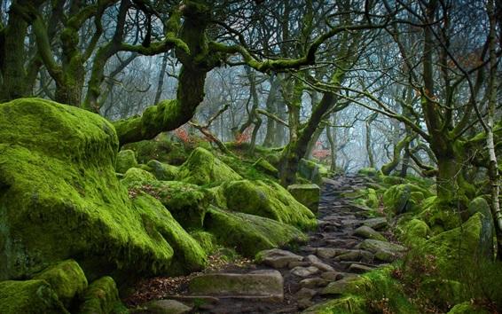 Fond d'écran Padley Gorge, Peak District, Derbyshire, Angleterre, arbres, mousse