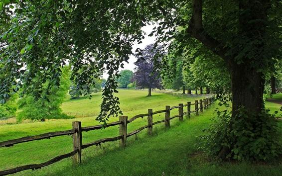 Fond d'écran Parc, arbre, clôture, herbe, nature