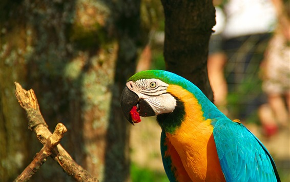Wallpaper Parrot photography, macaw, beak, blue yellow feather