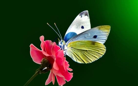 壁紙 ピンクの花、蝶、羽、アンテナ
