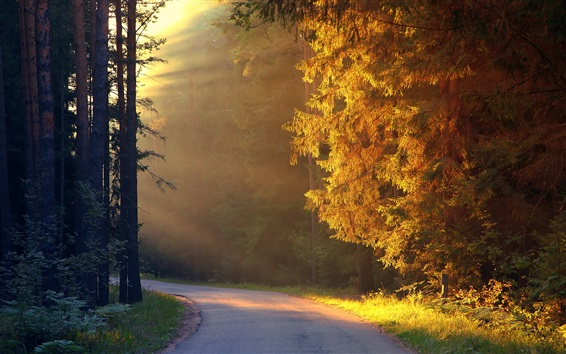 Trees, forest, road, sunshine Wallpaper Preview