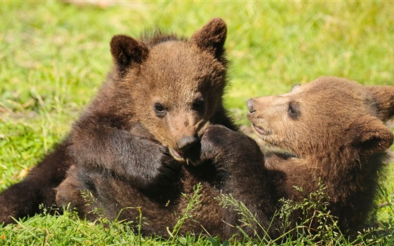 Wallpaper Two bears cubs playful, grass