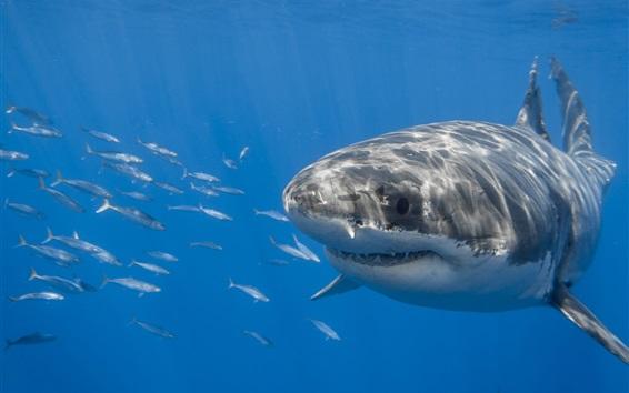 Wallpaper Underwater, sea, shark, fish