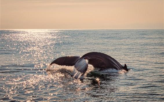 Обои Хвост кита из воды, море, блики