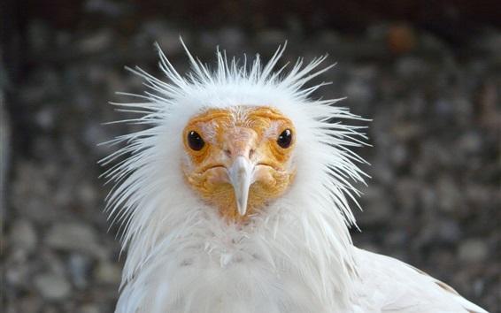 Papéis de Parede Pássaro de penas brancas