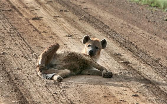 Papéis de Parede Cão selvagem deitado no chão