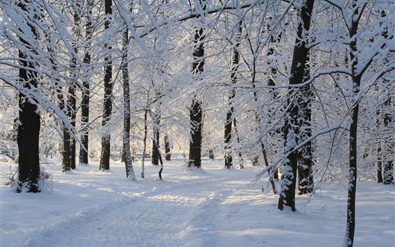 Fond d'écran Forêt hivernale, neige épaisse, arbres, nature