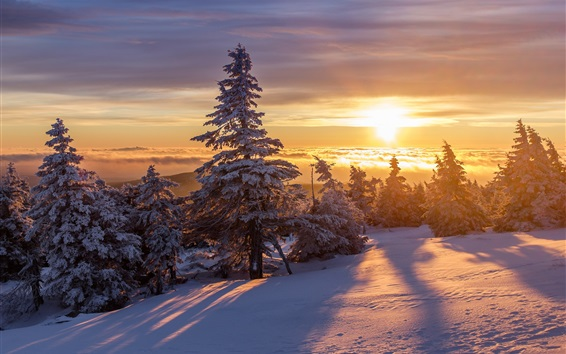 Wallpaper Winter, thick snow, forest, trees, sunrise, morning